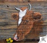 Portrait de vache sur vieux bois