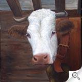 Vache au regard tendre
